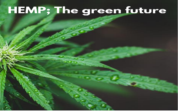 Hemp Fabric-The green future