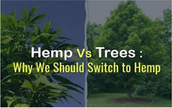 Let's talk of sustainability- hemp papers!