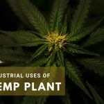 Industrial Uses of Hemp Leaves