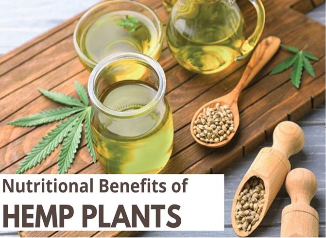 Top 6 Nutritional Benefits of Hemp Plant?