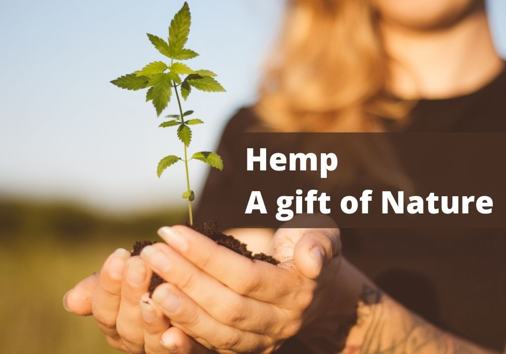 Why hemp is considered a gift of nature.