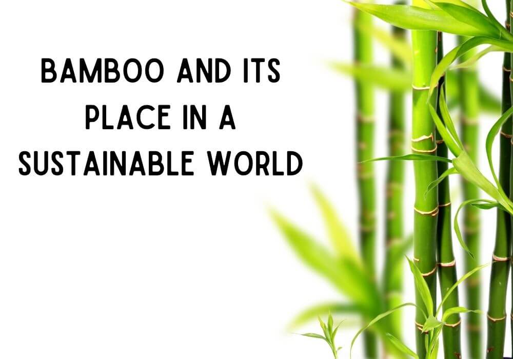 Bamboo and Its Place In A Sustainable World.
